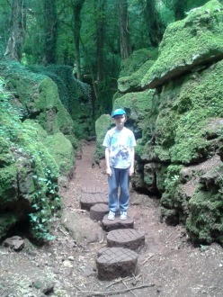 The dinosaur feet at Puzzlewood