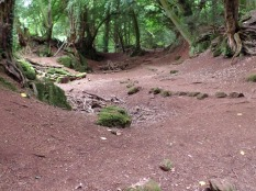 Puzzlewood, filming location for Doctor Who Flesh and Stone