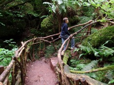 Tom explores Puzzlewood