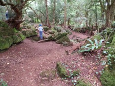 Star Wars Tarkodana filming location Puzzlewood