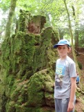 Tom looks at the moss at Puzzlewood