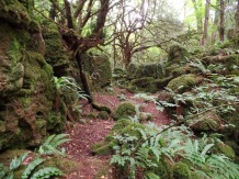 Ferns at Puzzlewood