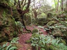 Ferns at Puzzlewood